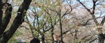4월에는 벚꽃구경이 최고에요^^